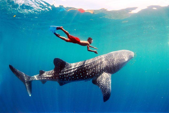 «Щедрый улов»: топ 7 самых больших рыб
